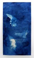 Ann Holsberry Hover 2014 Cyanotype & Gouache 72x38