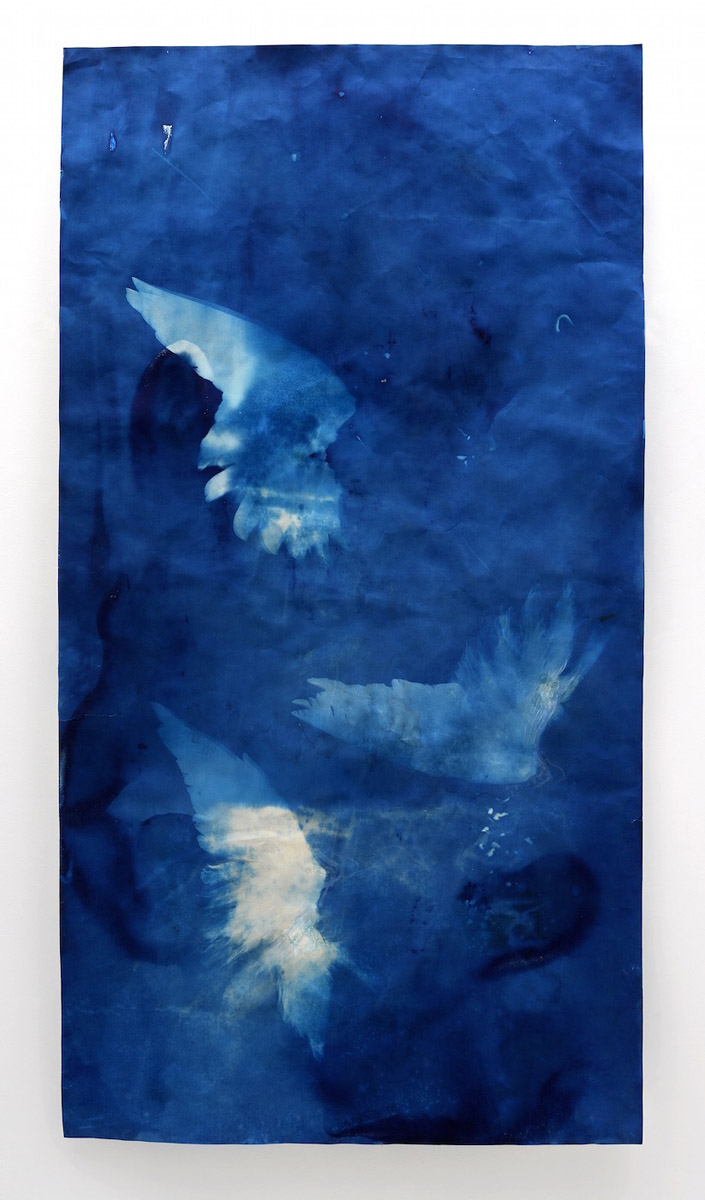 Ann Holsberry: Hover, 2014, Cyano Gouache 72 in. x 38 in.