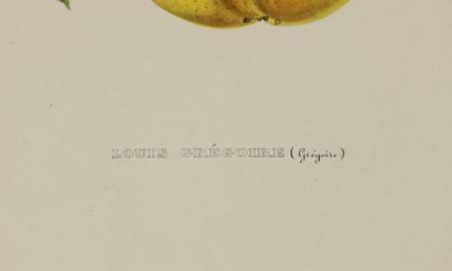 Original Hand-Colored Lithograph: Commission Royale De Pomologie. Annales De Pomologie. Brussels: F. Parent, 1853-1860. Garden Court Antiques, San Francisco