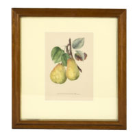 Original Hand-Colored Lithograph: Commission Royale De Pomologie. Annales De Pomologie. Brussels: F. Parent, 1853-1860. Garden Court Antiques, San Francisco