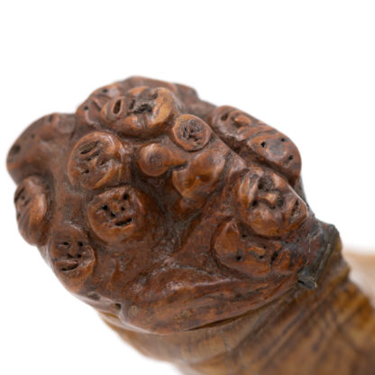 Rare and Early 19th Century, Whimsical, Carved, Scottish, Rams Horn Snuff Mull Of Small Proportions, Circa 1820.